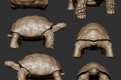 3D sculpted tortoise from multiple points of view by Britney Luong