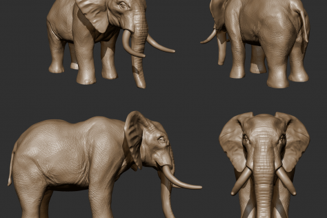 3D sculpted elephant from multiple points of view by Mariana Rios
