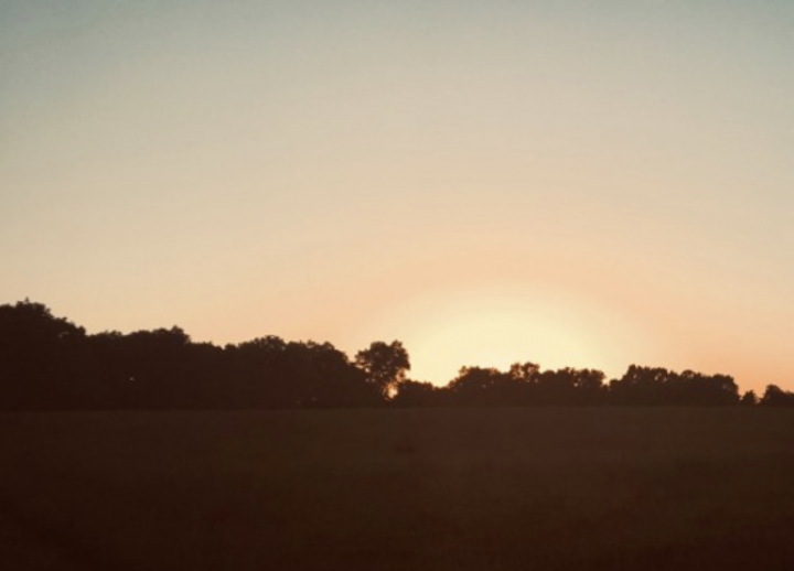 picture of sun setting over a silhouetted tree line